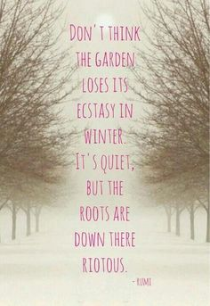 Don't think the garden loses it's ecstacy in Winter, it's quiet, but the roots down there are riotous!