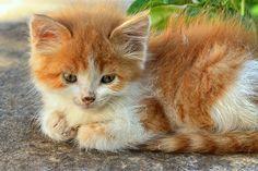 Needs TLC...street kitten. Hydra island, Greece