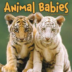 Animal Babies 2016 Mini Wall Calendar: 9781438838991 | Baby Animals | Calendars.com