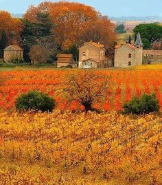 Autumn Vineyard Provence, France
