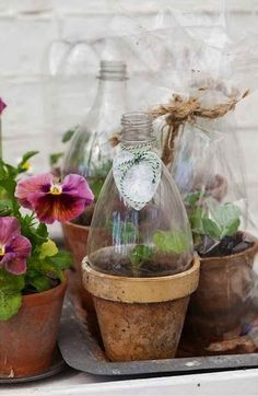 Protect your plants by recycling plastic bottles and adding a touch of style