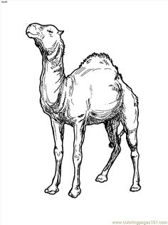 Camel Coloring Page Images