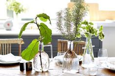 Hydroponic Gardening: How to Easily Grow Plants In Water | Apartment Therapy