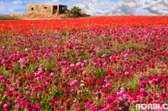 This gallery features photos from the snowy Golan Heights to the lush Galilee Mountains, from the urban nature of Tel Aviv to the arid Negev desert. Description from noamchen.com. I searched for this on bing.com/images
