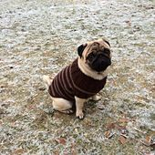 """Ravelry: Pug Dog Sweater pattern by Angelcatkins (Elizabeth Watkins) Designs   You need this for your """"Pug babies!"""" Pattern is on Ravelry and free."""