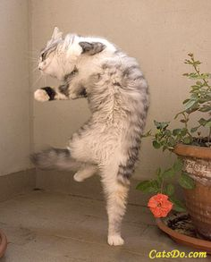 I'm dancing because I'm feeling very happy.