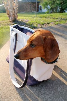 Lands End tote bag for dogs. Even fits Dachshunds! Check it out @ AmmotheDachshund.com