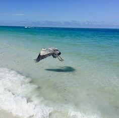 Lido Beach, Whale, Bird, Animals, Whales, Animales, Animaux, Birds, Animal
