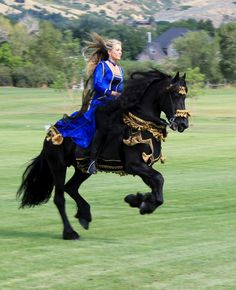 The Magnificent Friesian Spirit - Apollo, Ster Friesian stallion standing at stud at Royal Grove Stables http://www.royalgrovestables.com/