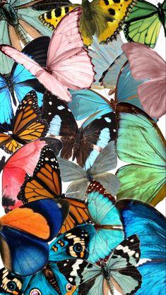 Tumblr Wallpaper, Look Wallpaper, Wallpaper Animes, Hippie Wallpaper, Cute Patterns Wallpaper, Aesthetic Pastel Wallpaper, Aesthetic Wallpapers, Butterfly Wallpaper Iphone, Iphone Background Wallpaper