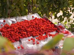 A Natural Treat for Earth Day: Nothing Artificial. No GMOs. Earth Day, Healthy Treats, Berry, Wellness, Holidays, Fruit, Natural, Red, Crafts