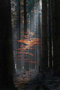 """""""Un árbol es nuestro contacto más íntimo con la naturaleza."""" George Nakashima"""