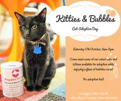 Come meet the cat of your dreams... #MaggiesRescue #CatAdoptionDay