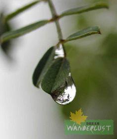 A drop of tear Photo Credits: Saikat Das  Feature Photography - Rainy Day