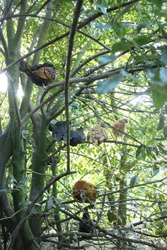 Our Forest Garden Flock - Multi-storey roosting