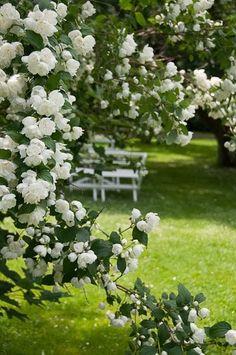 Struiken Met Bloemen Voor In De Tuin.45 Beste Afbeeldingen Van Tuin Struiken In 2015 Tuin