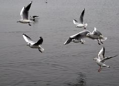 My first pic of moving objects :)  #birds #water #photography #nikon #nikond90 #poland #camera #photographer #beauty