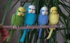 Knitted budgies. (The pattern can be found on Etsy)
