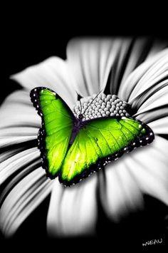 Beautiful butterfly on a beautiful flower