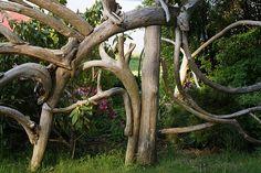 garden driftwood fence