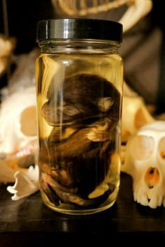 Black Wolf Pup Preserved Wet Specimen for sale. (Personally, I love bones and what not but I don't think I'd want this in my collection).