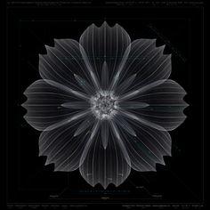 Macoto Murayama, Cosmos sulphureus, 2010