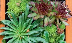 Plantas para jardins externos fáceis de cuidar - Blog Portobello