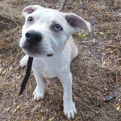 72 Best Lifeline Puppy Rescue Images Shelters Shelter Adoption