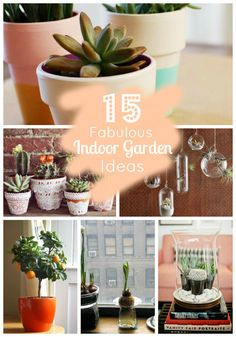 15 fabulous indoor garden ideas... now if I can just do it without killing the plants...