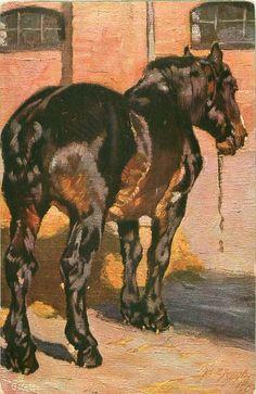 brown/black horse stands facing away in yard