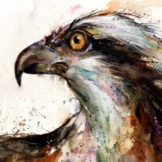 OSPREY Original Watercolor Painting By Dean by DeanCrouserArt