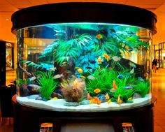 Freshwater Aquascaping - Fish Gallery Inc.