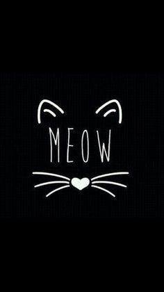 Meow cute wallpapers, dark phone wallpapers, phone backgrounds, wallpaper b Wallpaper Fofos, Cat Wallpaper, Tumblr Wallpaper, Iphone Wallpaper, Black Wallpaper, Crazy Cat Lady, Crazy Cats, Phone Backgrounds, Wallpaper Backgrounds