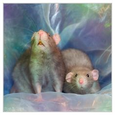 Painterly - Fancy rats by DianePhotos