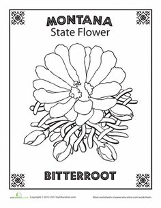 Worksheets montana state flower for Meadowlark coloring page