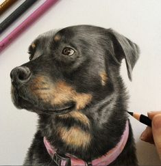 Beautiful Animal Pencil Drawings by British Artist Danielle Fisher