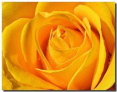 Facelift without surgery: Best Natural Face Lift Methods Yellow Flower Wallpaper, Sunflower Wallpaper, Rose Wallpaper, Orange Roses, Red Roses, Facelift Without Surgery, Yellow Rose Flower, Rose Flowers, Natural Face Lift