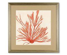 Gerahmtes Wandbild Sea Weed, 50 x 50 cm