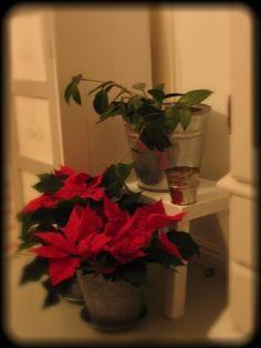 Joulu Plants, Christmas, Yule, Xmas, Flora, Planters, Christmas Music, Noel, Natal