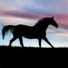 e6e7d14edf7a4d3d93ab96290a1700e2--horse-silhouette-wild-mustangs.jpg (483×483)