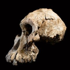 Scientists put a face on an ancient human ancestor — The Wall Street Journal