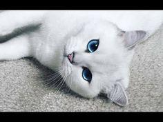 Acayip tatlı kedi 😊😊