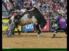 Stormy Wing hangs up Cyber Cat, but is saved by Frank Newsom. Photo by Andy Watson / BullStockMedia.com.