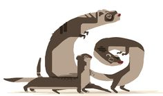 The illustration stage for 12 Huia Birds has wrapped with all of Stacy's lovely images assembled together nicely in the app. Here's an early sketch test of those horrible mustelids: stoat, ferret and weasel. More early sketches to come. Best Build, Ferret, Rats, Stage, Sketches, Birds, Illustration, Drawings, Ferrets