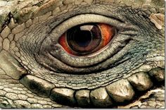 Nature in the Animals Eyes Unreliable Pictures of Animals eyes