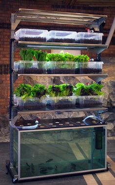 Very cool concept- sustainable fish and veggies in a small unit.