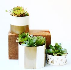 Der moderne Look für die Pflanzen ganz leicht selbst gestaltet mit Hilfe von Papier #diy #pflanzenfreude #pflanze #plant #topf #planter