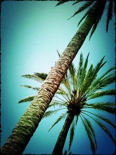 Lomo Palm Tree [*by pococomun on Etsy]