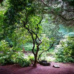 Tree, Norrvikens trädgårdar, Sweden