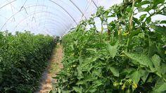Azienda Agricola Olivieri Stefano, nostro produttore e fornitore di frutta e verdura biologica!
